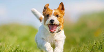 Our Pet Club Health Plan